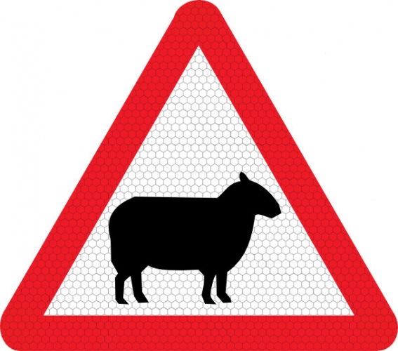 Sheep On Road Road Sign 549 Ssp Print Factory