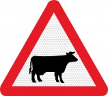 Cattle on road road sign 548