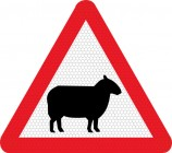Sheep on road road sign 549